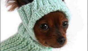 Как связать собаке шапку для собаки