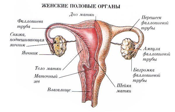 Сильная опоясывающая боль в спине слева