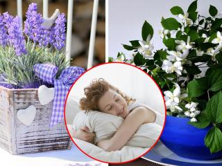 Какие растения помогают выспаться?