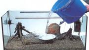 Как подготовить аквариум к заселению?