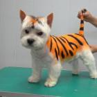 Зачем нужны салоны красоты для домашних животных?