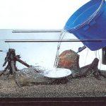 Как подготовить аквариум к заселению