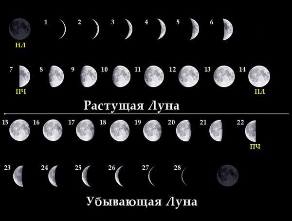 Как определить в какой фазе находится луна?